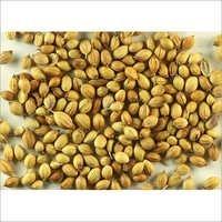 Coriander Seeds (Dhania ,Hara Dhaniya)