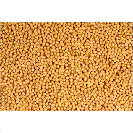 Mustard Seed (Sarson)