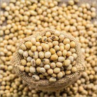 Export Quality Soybean