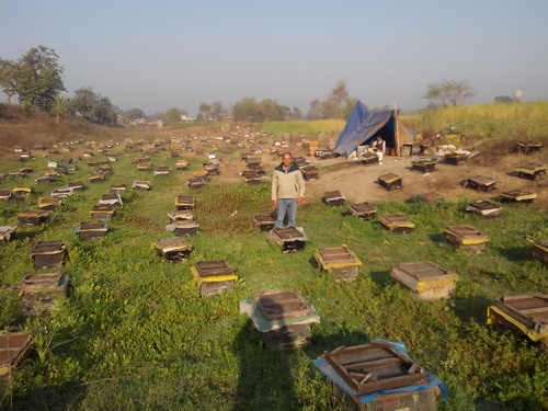 Honey Processing Consultancy Service