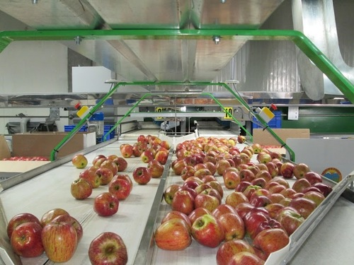 Food Processing Consulting