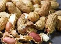 Roasted Groundnut In Shell