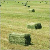 Premium Alfalfa Hay Bales