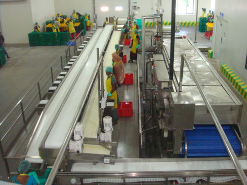 IQF Vegetable and Fruit Processing Marigo Line & Blancher