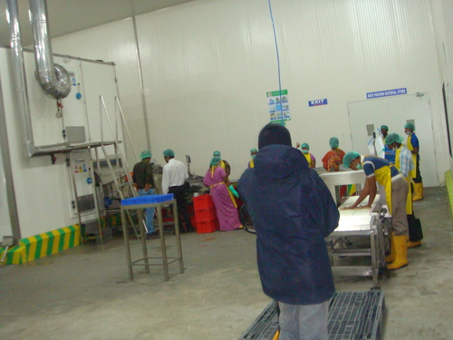 IQF Vegetable and Fruit Packing Line