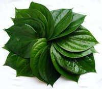 Vethallai (Beatle leaves)