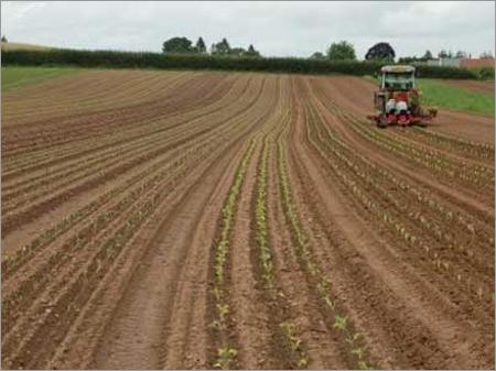 Plug Farming