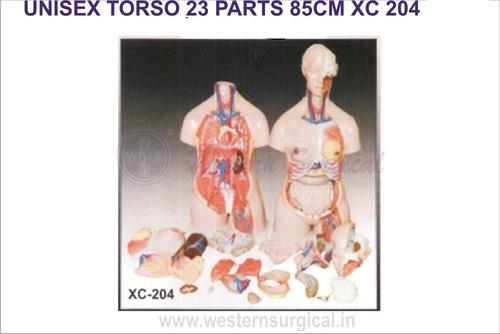 UNISEX TORSO 23 PARTS 85CM