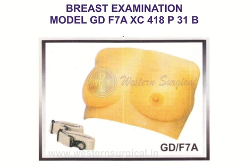 Breast Examination Model