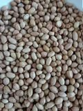 Indian Peanuts Exporter