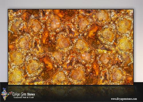 Brown Petrified Wood Slabs