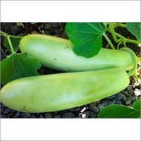 Bottle Gourd Long Seeds for cultivation