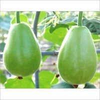 Round Bottle Gourd Seeds