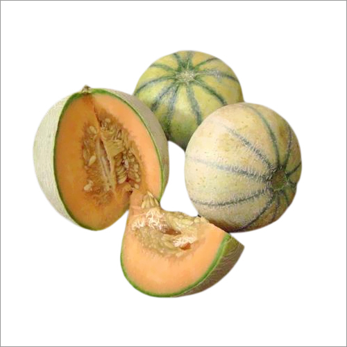 Muskmelon Seeds for Showing
