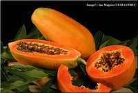 Papaya Seeds for sowing
