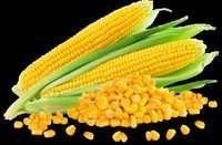 Sweet Corn Seeds for sowing
