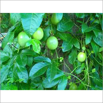 Fresh Passion Fruit Extract