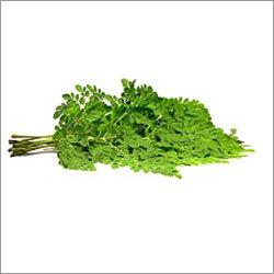 Moringa Leaves Extract