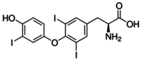 3,3′,5 Triiodothyronine (T3)