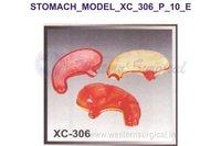 Stomach model
