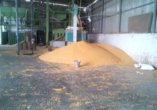 Yellow Maize Bird Feed