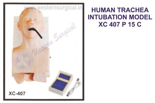 Human Trachea Intubation Model