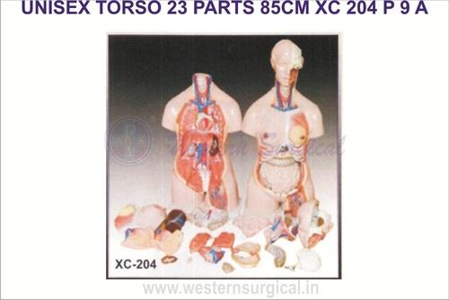 UNISEX TORSO 23 PARTS 85 CM