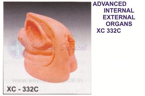 Advanced Famale Internal & External Organs