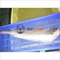 Corvina Fish