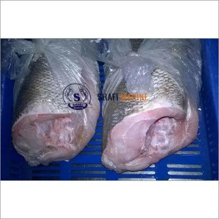 Fresh Corvina Fish