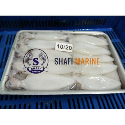 Squid Whole Cleaned Fish