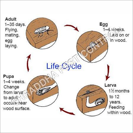 Wood Pest Control Services