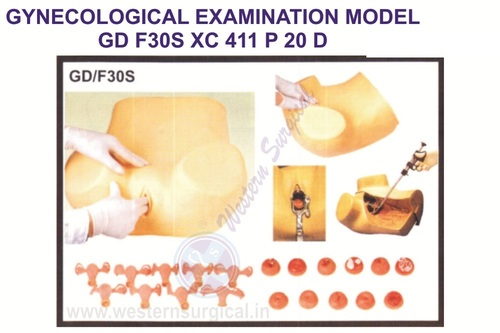 Gynecological Examination Model