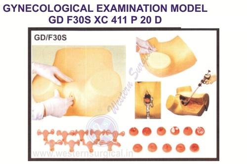 Model Of Gynecological Examination
