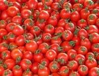 Tomato Fresh Vegetable