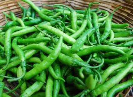 Green Fresh Chilli