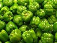 Fresh Green Capsicum Pepper