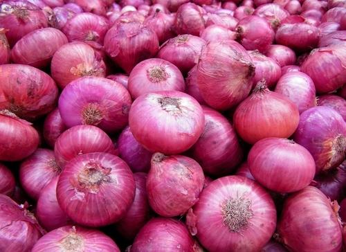 Export Quality Onion