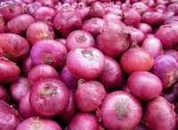 Export Quality Onion