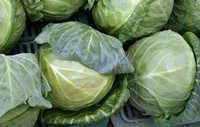 Natural Cabbage Vegetable