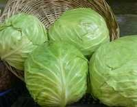 Export Quality Cabbage