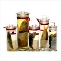 Glass Specimen Jars
