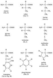 Amino acid standards for fluorescence detection