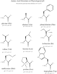 Amino acid standards, physiological