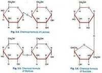 Base/Neutrals Compounds 2A - WP