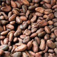 Organic Raw Cocoa Beans