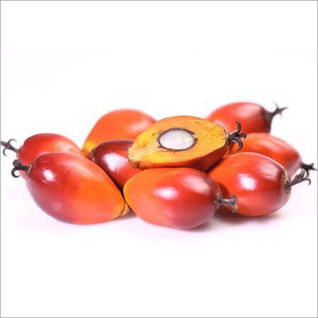 Organic Raw Palm Kernel Nuts