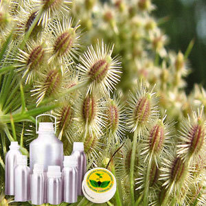 Carrot Seed CO2 Extract Oil