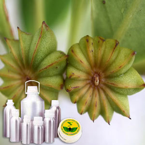 Wildcrafted Anise Seed Oil