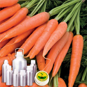 Carrot Tissue Infused Oil